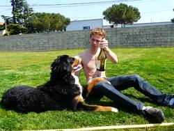 Niou, chien Bouvier bernois