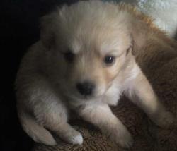 Titouya, chien
