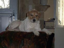 Saphire, chien
