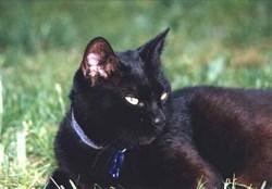 Bébé, chat Gouttière