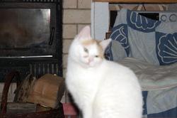 Pousette, chat Gouttière