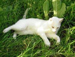 Etincel, chat Gouttière