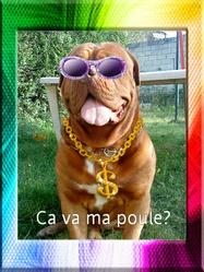 Blunt, chien Dogue de Bordeaux