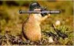 Kekette, rongeur Hamster