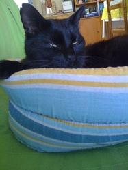 Ciboulette, chat Gouttière