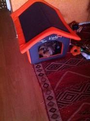 Franklin, chien Yorkshire Terrier
