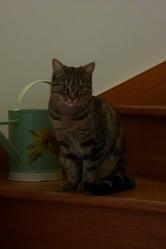 Elfi, chat Gouttière