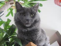 Monsieur, chat Gouttière