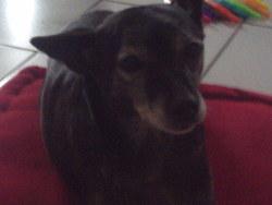 Orphée, chien