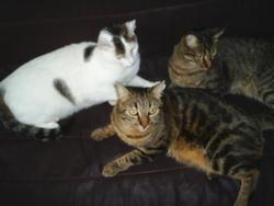 Kali,Roméo,Kenzo, chat
