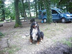 Bengy Et Douchka, chien Bouvier bernois
