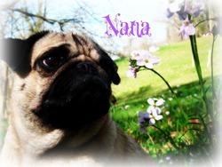 Naya, chien Carlin