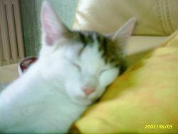 Eclipse, chat Gouttière