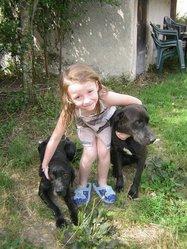 Bianka, chien Braque allemand à poil raide