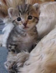 Lilo, chat Gouttière