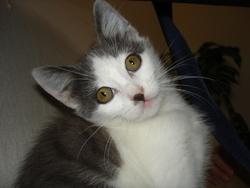 Ninette, chat Gouttière