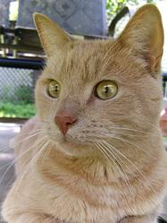 Chico Rip, chat Gouttière