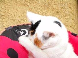 Vénus, chat Gouttière
