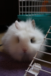 Wooky, rongeur Lapin