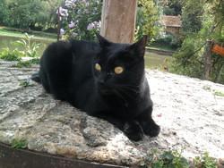 Roxy , chat Gouttière