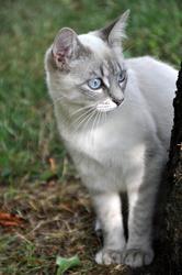 Princesse, chat Gouttière