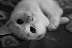 Plume, chat Gouttière