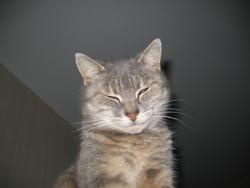 Bouda, chat Gouttière