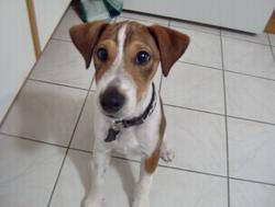 Coockie, chien
