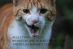 Biskott, chat Gouttière
