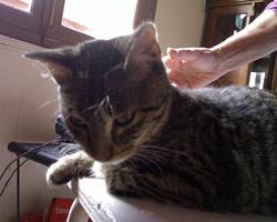 A Trouver, chat Gouttière