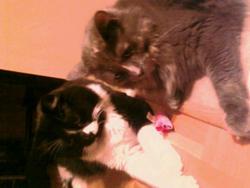 Mousquetaire Et Angéline, chat