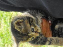 Katy, chat Gouttière