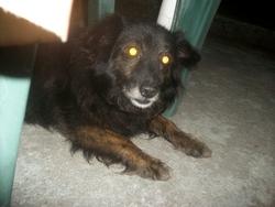 Max, chien Billy