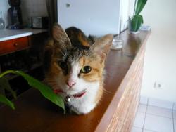 Engy, chat Gouttière