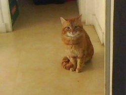 Courageux, chat Gouttière