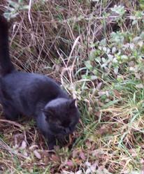 Léo Felix, chat Gouttière