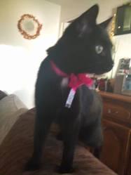 Chanel, chat Gouttière