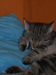 Ethanol, chat Gouttière