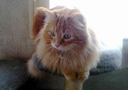 Caramel Dcd Le 22 Avril 2016, chat Gouttière