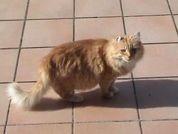 Basil, chat