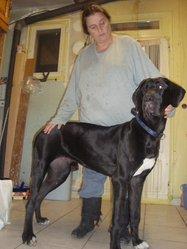 Eyonnara, chien Dogue allemand