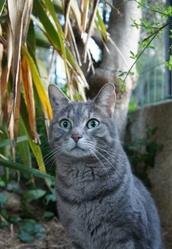 Byron, chat Gouttière