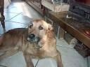 Tyrus, chien