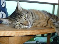 Mitsu, chat Gouttière