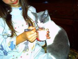 Mamoune, chat Gouttière