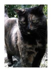 Cacahuète, chat Gouttière