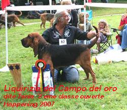 Tania, chien Chien de Saint-Hubert