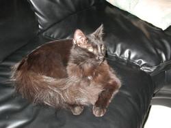 Ramses Dit Petit Bou, chat
