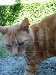 Mushu, chat Gouttière