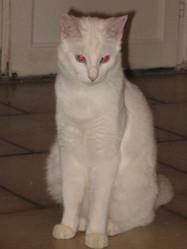 Coton, chat Gouttière